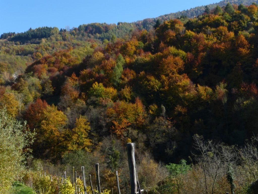 Quando il bosco si colora - Gaia Erbe