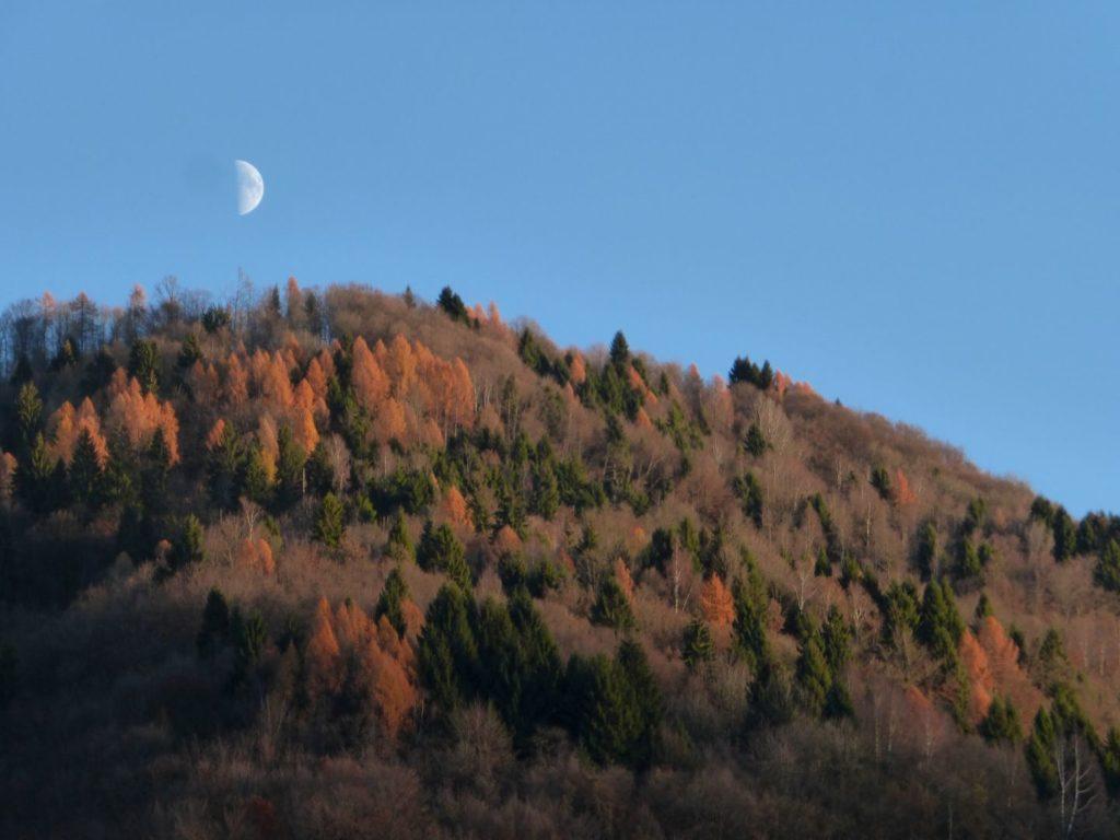 Le foglie stan cadendo, il larice si tinge d'oro - Gaia Erbe