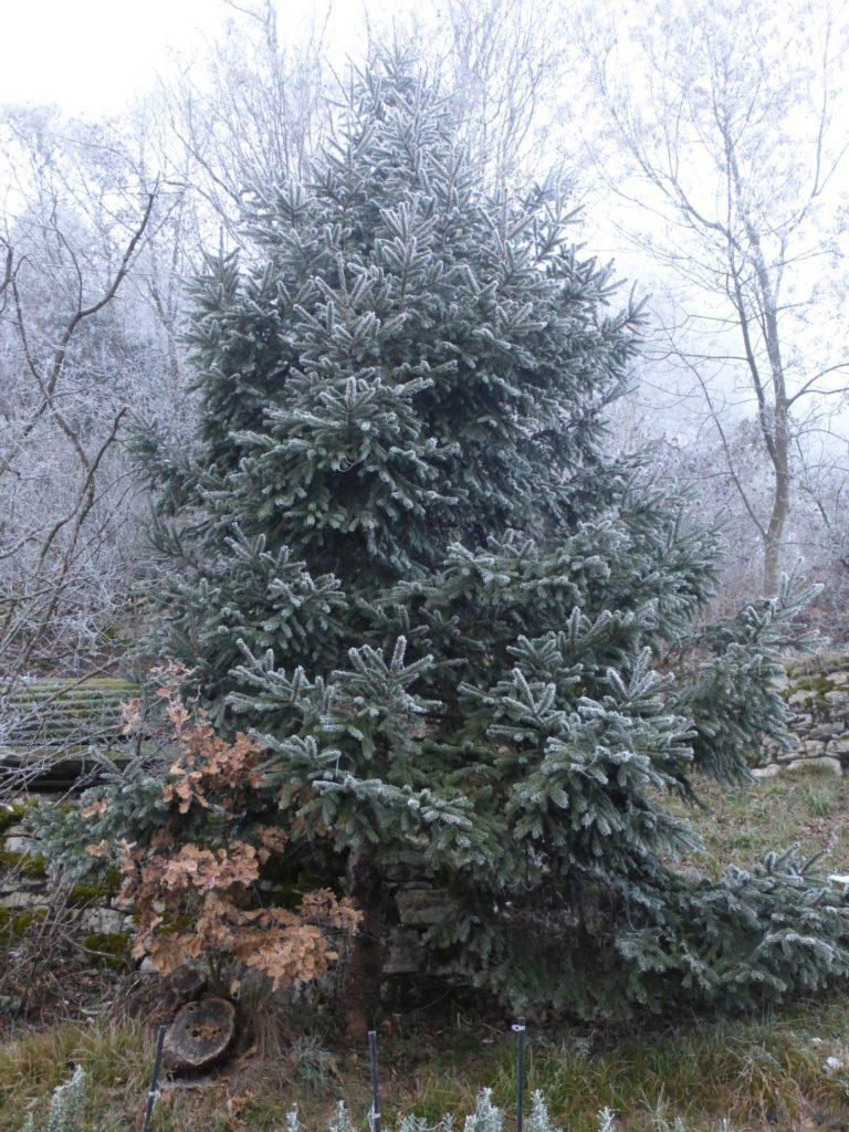Albero di Natale secondo Madre Natura - Gaia Erbe