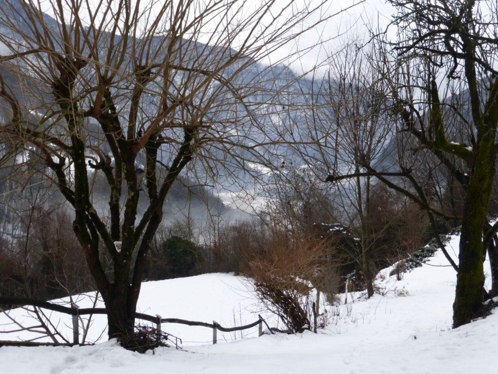 L'inverno in cortile - Gaia Erbe